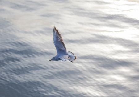 a seagull fly over the water in the harbour of barcelona. Stock Photo - 18822272