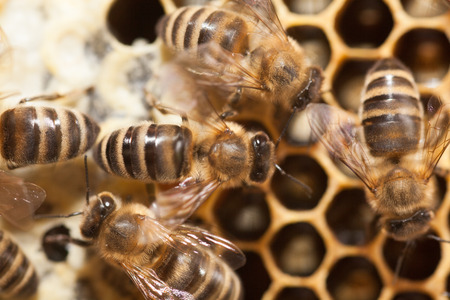 Macro picture of bees in a beehive.