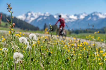 pretty senior woman riding her electric mountain on warm spring day with snoe capped bike in the Iller valley near Oberstdorf with snoe capped Allgau High Alps in background, Allgau Alps, Bavaria, Stock fotó