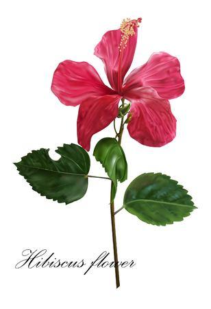 Hibiscus flower icon vector illustration.