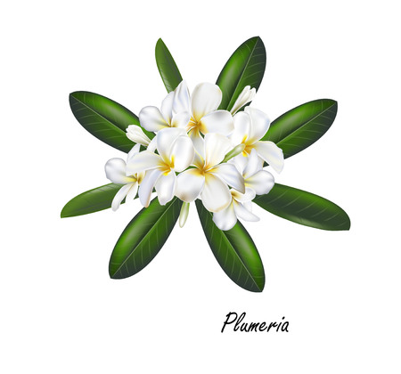 Plumeria flower ,vector illustration