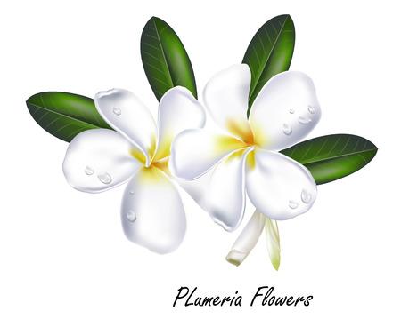 flower Plumeria illustration vector real style