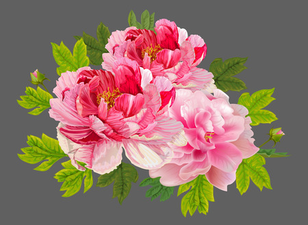 Peonies flral bouquet on grey back ground,vector illustration  イラスト・ベクター素材