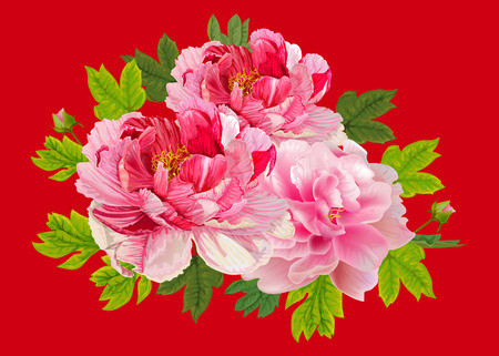 Peonies flral bouquet on red back ground,vector illustration  イラスト・ベクター素材