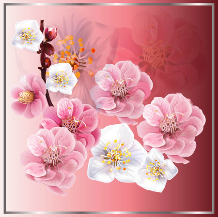 Chinese plum flowers on pink background,vector illustration  イラスト・ベクター素材