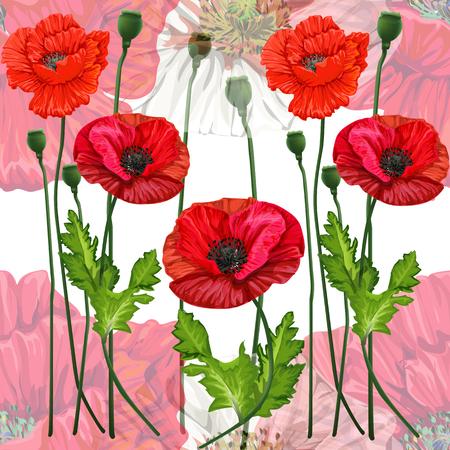 Modèle sans couture de fleurs de pavot Vecteurs