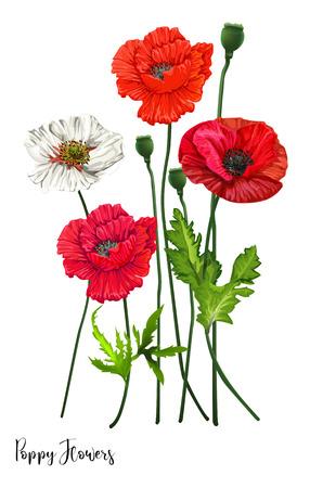 Poppy flowers on white background,vector illustration Ilustracja