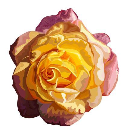Yellow single rose vector illustration