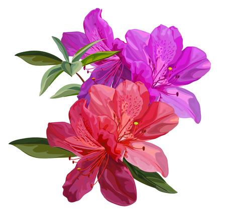 Ilustracja wektorowa kwiat azalii