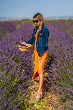 Rural lifestyle, young blonde caucasian woman in denim jacket and orange dress, in a lavender field with her purple flower in Olite. Navarra, Spain. Picking purple flowers