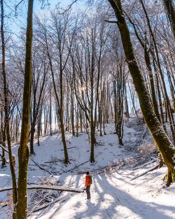 Beautiful snow-covered forest of the Artikutza natural park in oiartzun near San Sebastián, Gipuzkoa, Basque Country. Spain