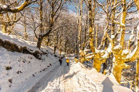 Walking towards the Oianleku natural park at sunrise, snowy beech forest in the town of Oiartzun in Peñas de Aya, Gipuzkoa. Basque Country Stok Fotoğraf
