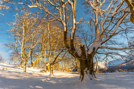 The Oianleku natural park at sunrise, snowy beech forest in the town of Oiartzun in Peñas de Aya, Gipuzkoa. Basque Country Stok Fotoğraf