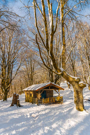 Beautiful refuge among giant trees in the Oianleku natural park in the town of Oiartzun next to Peñas de Aya, Gipuzkoa. Basque Country