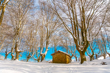 Beautiful refuge among giant trees in the Oianleku natural park in the town of Oiartzun next to Peñas de Aya, Gipuzkoa. Basque Country