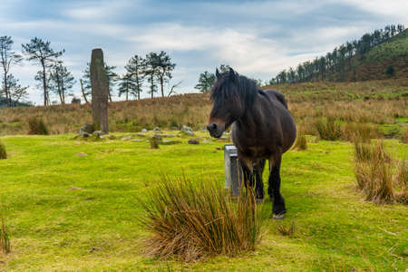 A wild black horse on top of Mount Adarra in the town of Urnieta near San Sebastian, Gipuzkoa. Basque Country