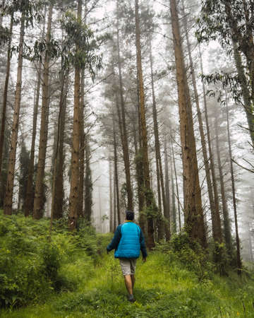 A young man walking in the blue jacket in the foggy forest. Spring on the path from Ispaster to Lekeitio, landscapes of bizkaia. Basque Country