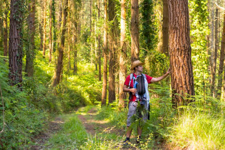 A young father with a hat and with his son in his backpack and looking at the pine trees in the woods, hiker lifestyle concept, copy and paste space, forests of the Basque country. Spain 版權商用圖片