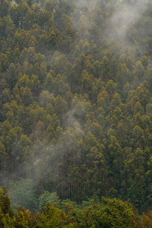 Wallpaper of trees in the mountain full of mist. Spring in Ispaster next to Lekeitio, landscapes of Bizkaia. Basque Country 版權商用圖片