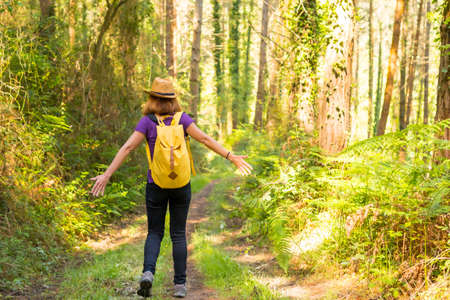 A young adventurer in a hat with a yellow backpack in the forest pines, hiker lifestyle concept, copy paste space, Basque Country forests. Spain