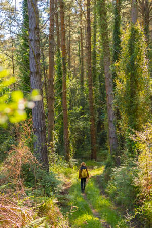 A young adventurer with a hat in the forest pines, hiker lifestyle concept, copy and paste space, Basque Country forests. Vertical photo
