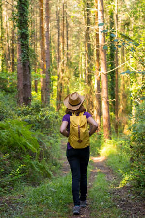 Traveler woman wearing a hat and looking at the forest pines, hiker lifestyle concept, copy and paste space, forests of the Basque country. Spain 版權商用圖片