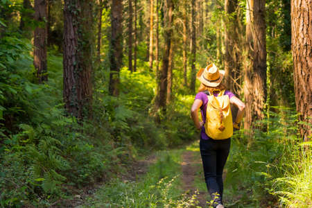 Traveler woman with a hat on her back and looking at the forest pines, hiker lifestyle concept, copy and paste space, forests of the Basque country. Spain