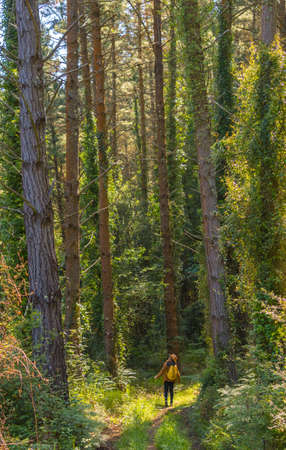 Forest pines and a young woman underneath looking up, hiker lifestyle concept, copy and paste space, Basque Country forests. Vertical photo 版權商用圖片