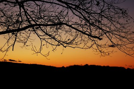 sunset with branches in contrast