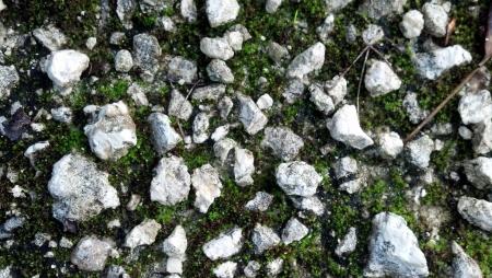 Rocks Stockfoto