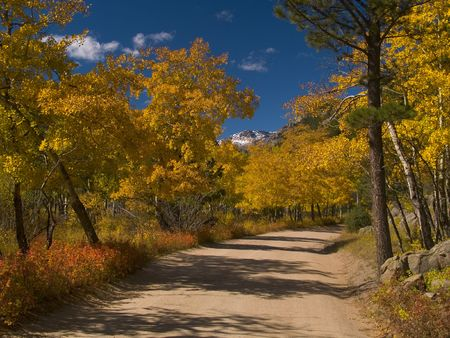 aspen grove: Aspen Road - The aspen grove on the road to the Fern Lake trail in Rocky Mountain National Park. Stock Photo