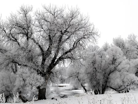 River Frost - The Big Thompson River on a foggy and frosty morning. Imagens
