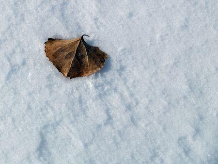 winter leaf: Winter Leaf: Platte River Park, Evans, Colorado