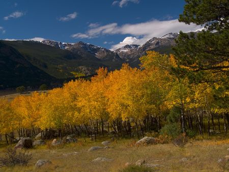 Moraine Park Autumn -  Rocky Mountian National Park