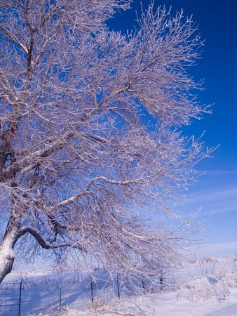 Frosted Branches and Blue Sky Stock Photo - 2237199