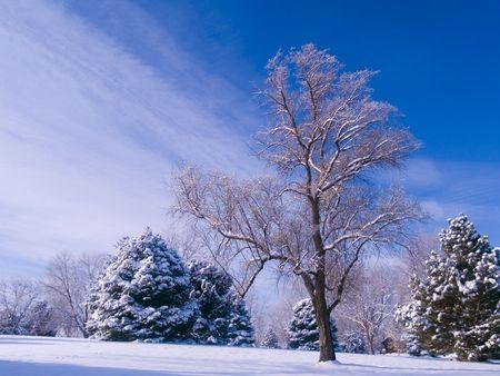 Frosted Park & Blue Sky