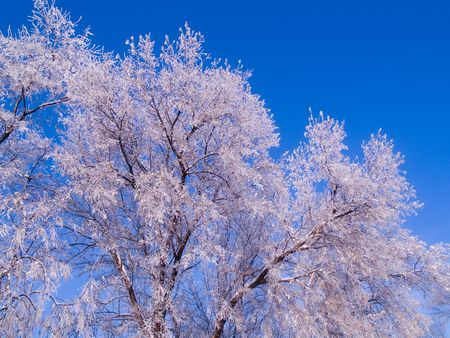 Frosted Tree Tops Stock Photo - 2248027