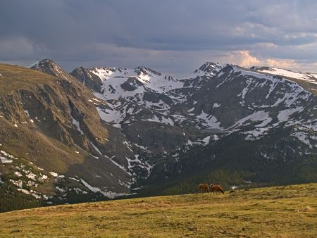 Alpine Pastoral - Elk in Rocky Mountain National Park