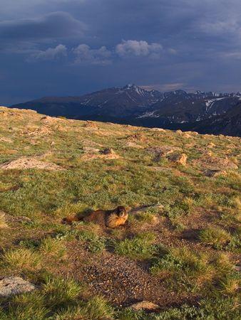 longs peak: Marmot & Longs Peak - Rocky Mountain National Park