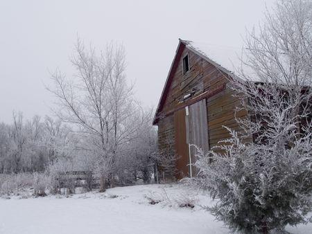 Oude Rode Tegen Morning White