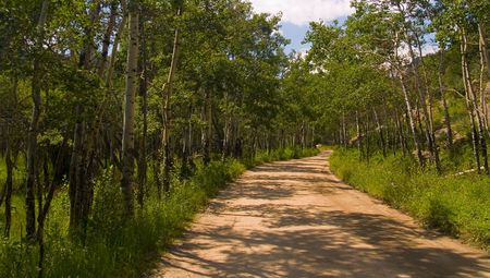 Green Winding Forest Road - Rocky Mountain National Park photo