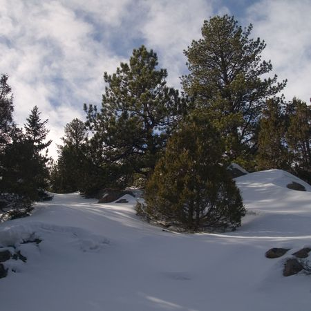 drifts: Forest Drifts -  Rocky Mountain National Park. Stock Photo