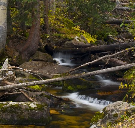 Cluttered Tranquility - Rocky Mountain National Park