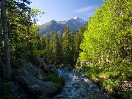 Sun Striking Aspen -  Rocky Mountain National Park