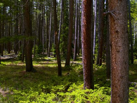 Wild Forest - Rocky Mountain National Park