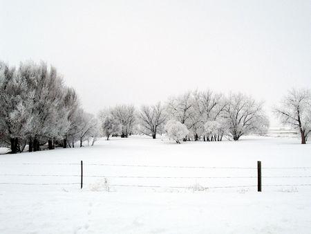 winter road: Winter Field - Colorado Stock Photo