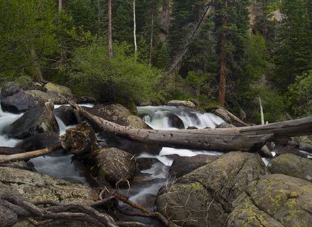 By Rapids and Fallen Trees - Wild Basin Area, Rocky Mountain National Park photo