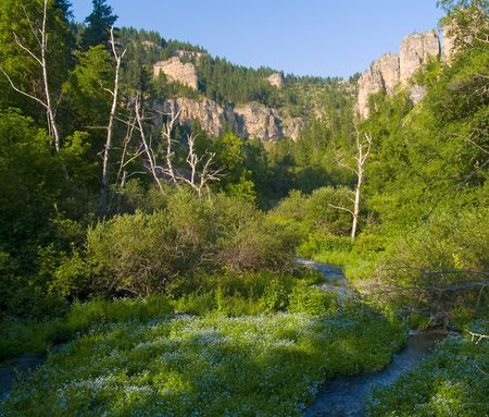 Flowers in cyan on the floor of Spearfish Canyon in the Black Hills of South Dakota