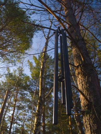 north woods: Wind chimes as morning light strikes the forest of the North woods of Minnesota.