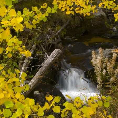 Autumn aspen leaves frame a small brook in Colorados Rocky Mountains.